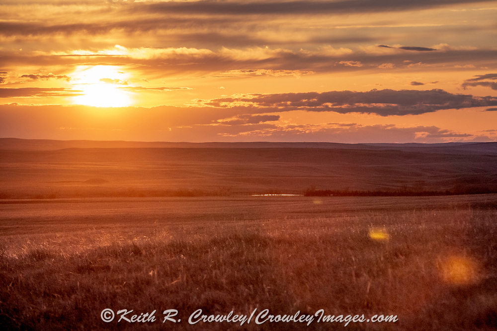 Sunset on the short-grass prairie.