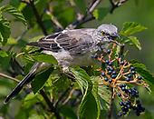 Birds of Prospect Park