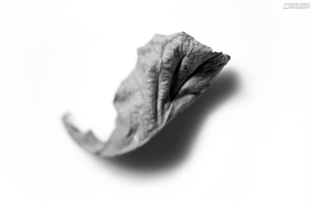 This series of pictures is about the truth of life after death, it shows the dry leafs, curled & shrinked after there life. The textures and forms are intersting.