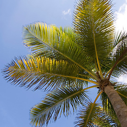 Sunny skies as see through the fronds of a palm tree on Isla Verde beach in San Juan, Puerto Rico.