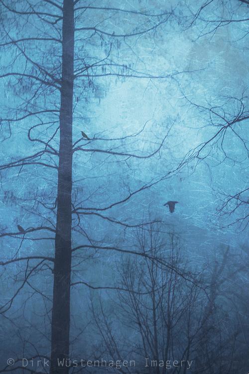 Kahle Bäume im Nebel mit Krähen, Wuppertal, Deutschland