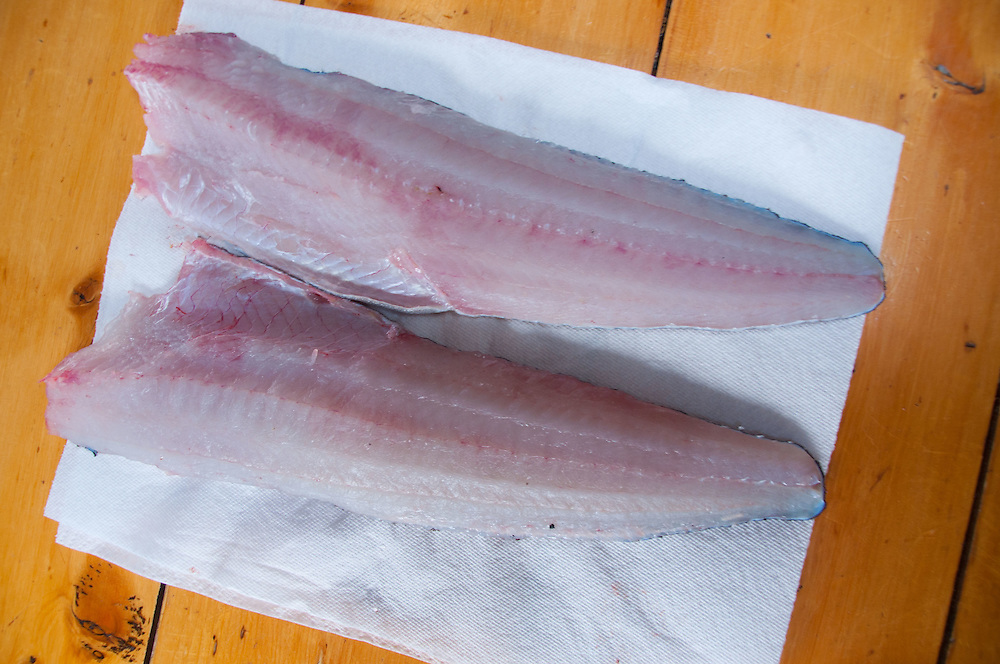 Ling Cod (Ophiodon elongatus) Fillets, Shaw Island, Washington, US