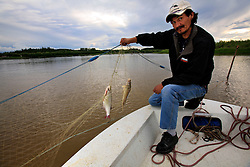CANADA ALBERTA FORT CHIPEWYAN 22JUL09 - Orville Grandjambe pulls a damaged whitefish out of his net on the river Quatrefouche, a tributary to Lake Athabasca, northern Alberta, Canada...In recent years, the frequency of deformities, lesions and cancers found in fish caught in Lake Athabasca has increased dramatically. Local residents suspect the rapidly expanding tarsands operations further upstream as the cause of their health concerns...The tar sand deposits lie under 141,000 square kilometres of sparsely populated boreal forest and muskeg and contain about 1.7 trillion barrels of bitumen in-place, comparable in magnitude to the world's total proven reserves of conventional petroleum. Current projections state that production will  grow from 1.2 million barrels per day (190,000 m³/d) in 2008 to 3.3 million barrels per day (520,000 m³/d) in 2020 which would place Canada among the four or five largest oil-producing countries in the world...The industry has brought wealth and an economic boom to the region but also created an environmental disaster downstream from the Athabasca river, polluting the lakes where water and fish are contaminated. The native Indian tribes of the Mikisew, Cree, Dene and other smaller First Nations are seeing their natural habitat destroyed and are largely powerless to stop or slow down the rapid expansion of the oil sands development, Canada's number one economic driver...jre/Photo by Jiri Rezac / GREENPEACE..© Jiri Rezac 2009