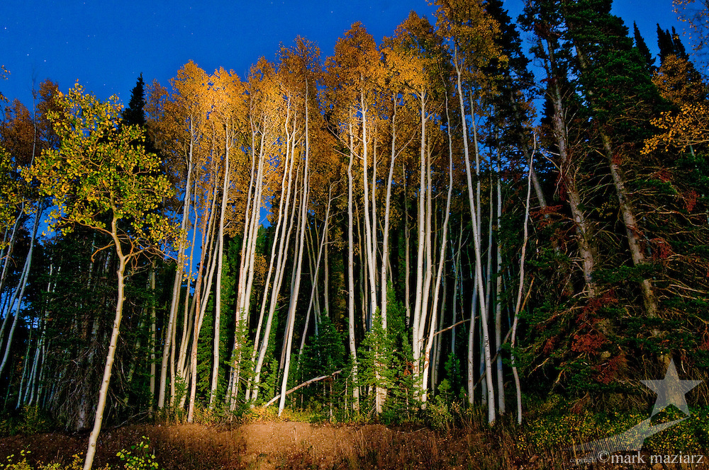 light painting in aspen forest at dusk above Park City, Utah