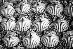 St. James Scallop Shell, Road to Santiago, Pontevedra, Spain - Portuguese Way