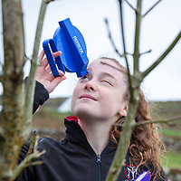 Roisin McNamara - An examination of ash die back in the ash tree in the area of the Burren
