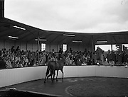21/09/1960<br /> 09/21/1960<br /> 21 September 1960<br /> Goffs Bloodstock Sales at Ballsbridge, Dublin. <br /> A general view of the Sales ring during the sales.