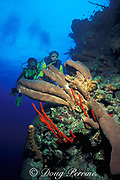 scuba divers on Bloody Bay Wall, Little Cayman Island ( Caribbean Sea )  MR 169   MR 170