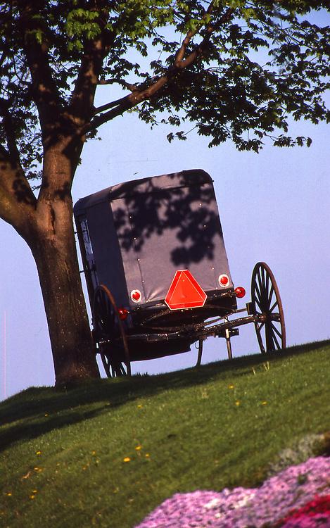 Lancaster Amish buggy portrait, PA