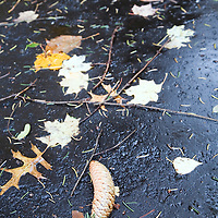 Fallen leaves and pine cones on the pavement on a rainy day