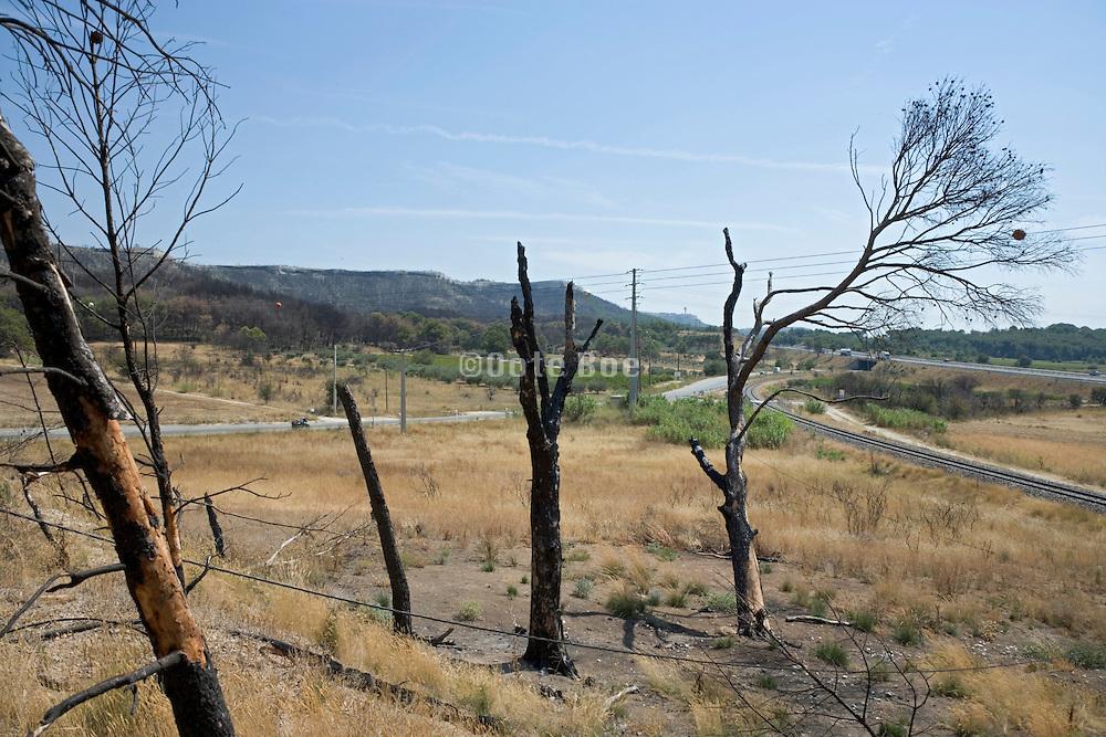 charred tree trunks France Provence