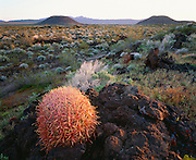 0605-1002 ~ Copyright: George H. H. Huey ~ California barrel cactus [Ferocactus acanthodes] growing out of basalt, from 1,000 year-old volcanic eruption, with cinder cones in distance. Mojave National Preserve, California.