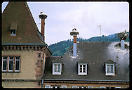 White storks (C. ciconia) nest atop chimneys of city hall in the town of Munster, Alsace. France
