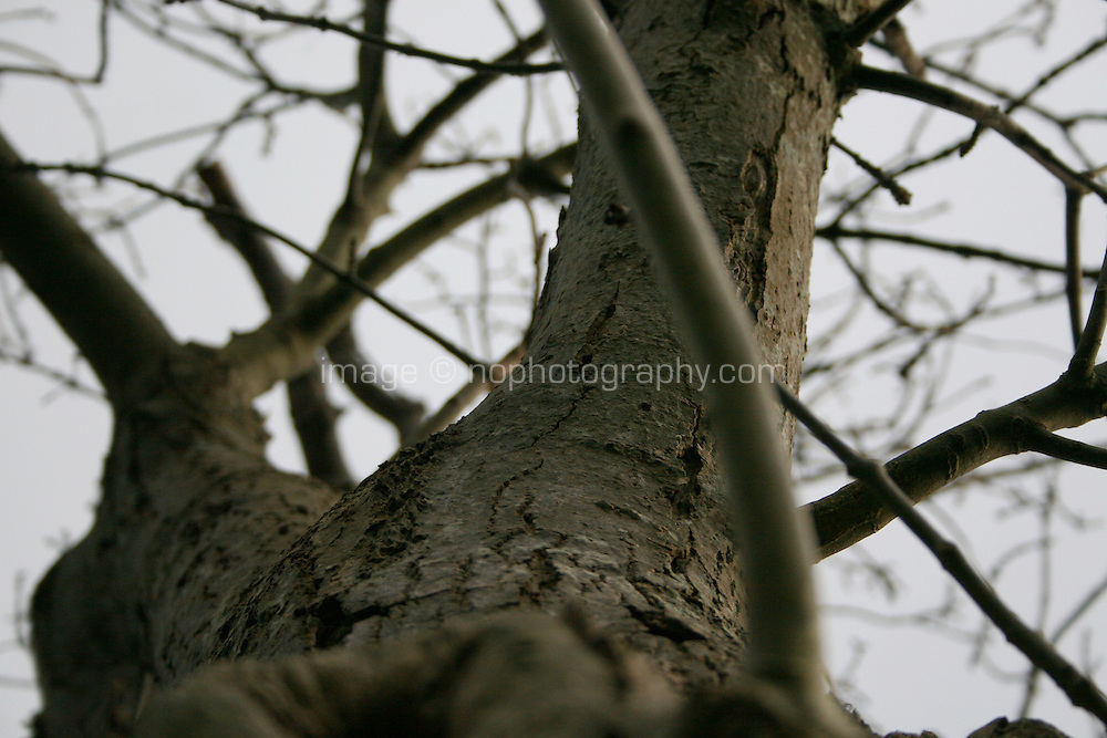 Close up of tree park in the winter at public park in Dublin Ireland