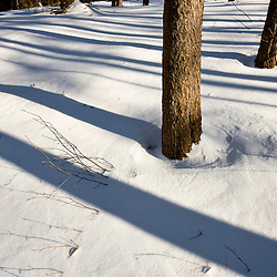 Tree trunks and shadows in snow in Groton, New Hampshire. Near Groton Hollow Road.