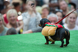 © Licensed to London News Pictures. 26/08/2013. London, UK. A dog dressed as a hot dog participates in the Paw Pageant 2013 held at Old Spitalfields Market in East London. Dogs wear designer fashion in a canine fashion show to raise money for Battersea Dogs and Cats home. Photo credit : Vickie Flores/LNP