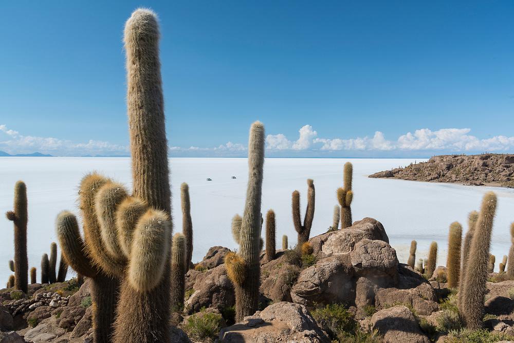 South America, Andes, Altiplano, Bolivia, Salar de Uyuni, Isla Incahuasi