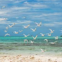 Parque Nacional Archipielago Los Roques, es un hermoso archipiélago de pequeñas islas coralinas que se encuentra ubicado en el Mar Caribe y ocupa 221.120 hectáreas. Gaviotas en Sebastopol.