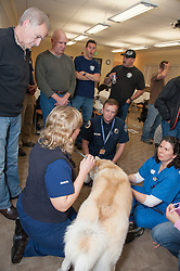 Staff at NWVS teach area first responders how to administer first aid and cpr to working dogs.  Participants include paramedics, fire, and police.