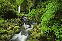Ruckel Creek waterfall, Columbia River Gorge National Scenic Area