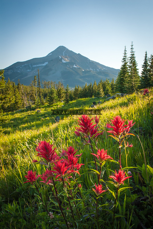 Indian Paintbrush grows in an alpine meadow with Lone Peak in the distance.  Limited Edition - 150