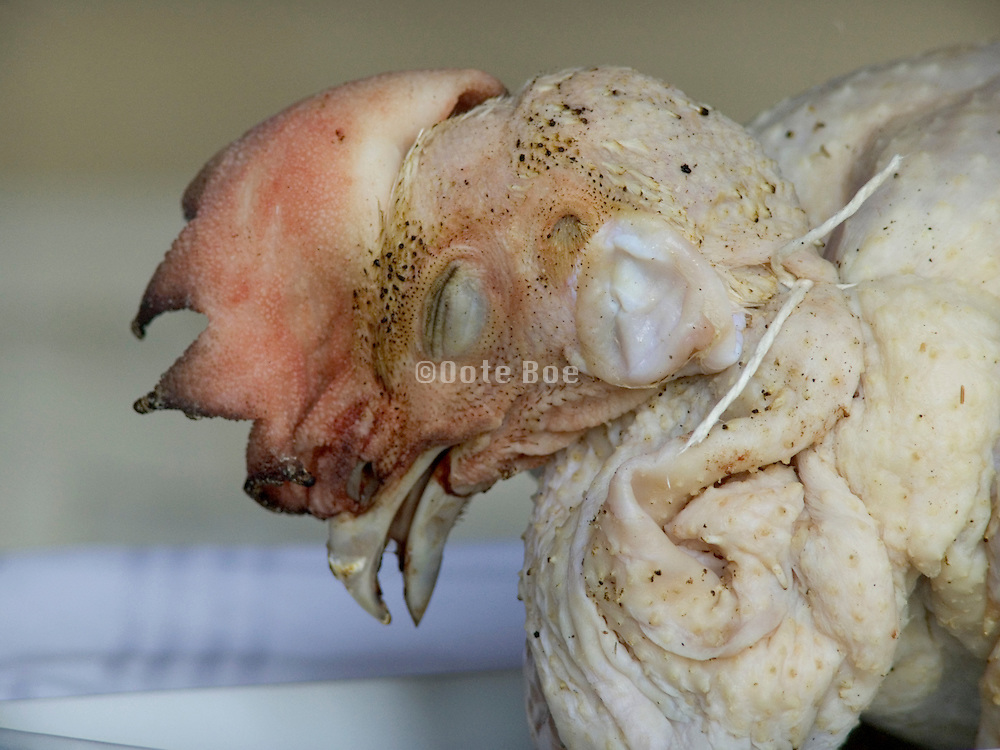 close up of the head of a chicken waiting to be to put in the oven