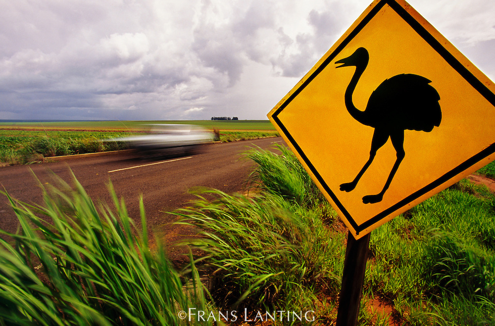 Road sign warning of rheas crossing near Emas National Park, Goias State, Brazil