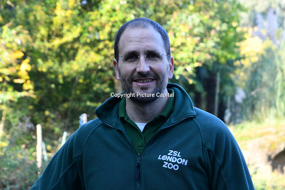 Dan Simmonds is a Zoo keeper for Gorillas for a Halloween treats and Smashing pumpkins at ZSL London Zoo on 25 October 2018.