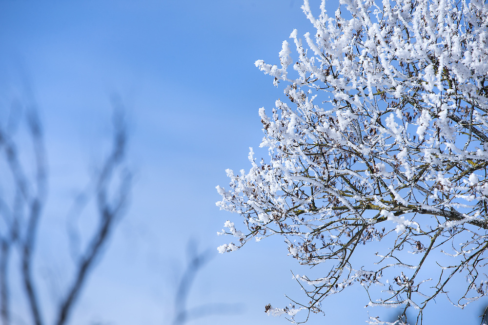 GABE GREEN/Press<br /> <br /> Hoarfrost collected on the branches of a tree near the bank of Fernan Lake glistens in the sun Wednesday morning.