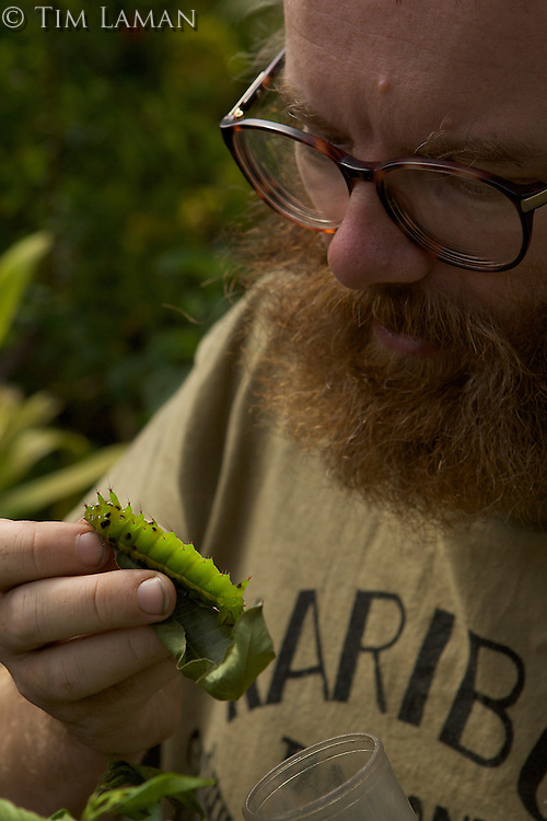 Entomologist Vojtech Novotny examining a large caterpillar..