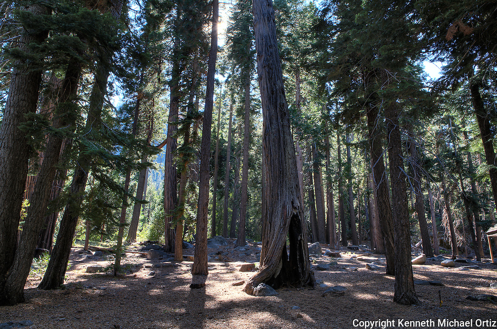 These were trees by Emerald Bay which is adjacent to Lake Tahoe.  Trees look small but in reality they were very large.