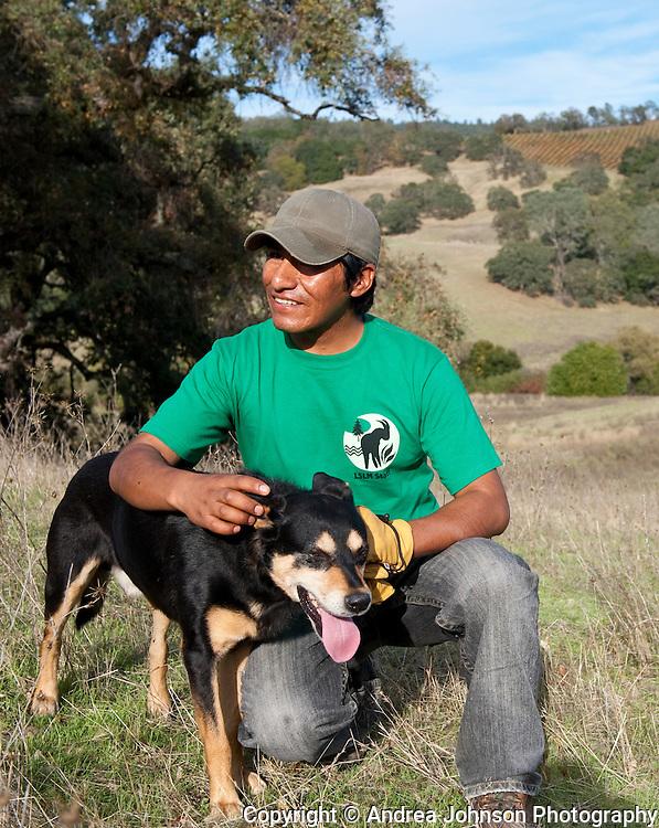 Jared, Peruvian sheep herder with his dog Jake, Somerston Wine Co & Priest Ranch vinyards, Napa, California