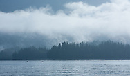 Sea kayakers paddle in calm waters after a rainstorm in Barkley Sound, BC as the sun burns off the clouds.