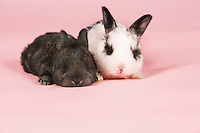 Two baby pet rabbits on pink background
