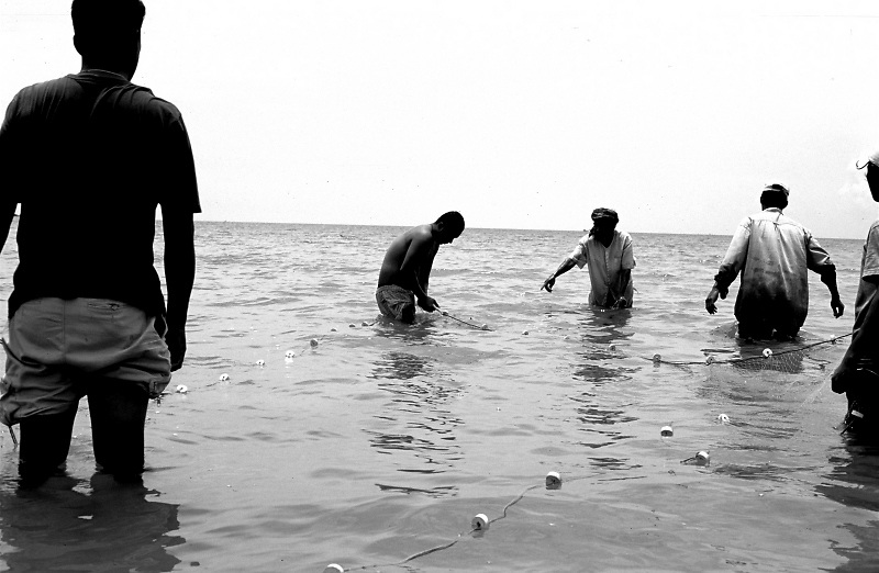 Thai fishermen using the 19th century surrounding net method, in shallow waters of a beach in Ko Phagan Island.
