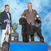 Portuguese Water Dog Specialty 05/23/2019