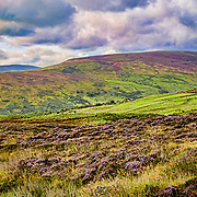 "Another view of the spectacular scenery in County Antrim, Northern Ireland.  All the purples are there and natural from the heather.  We had the ""good fortune"" to be in Ireland during some very turbulent weather, so we got wet a lot, but look at those clouds!"