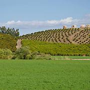 Santa Rosa Valley Agricultural fields. Santa Rosa, CA. USA.