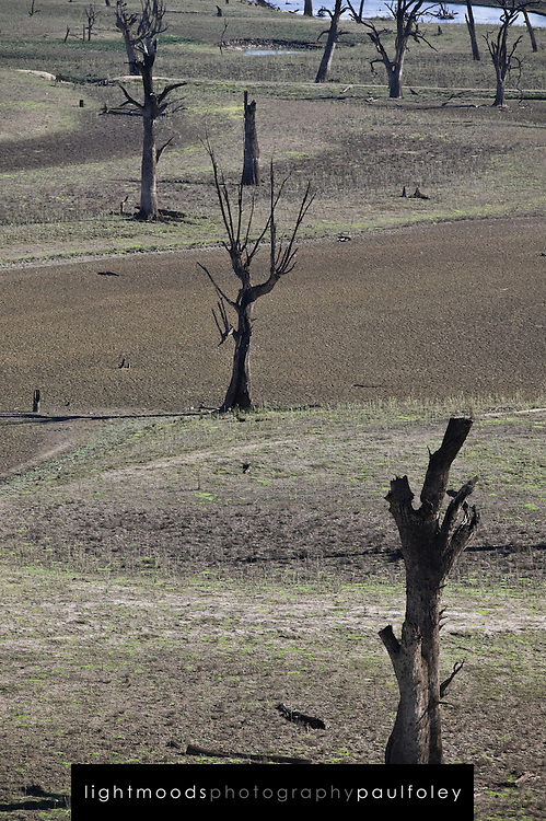 Effects of rising salinity on the banks of the drought ravished Murray River in South East Australia
