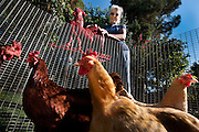 Rita Hoots has been keeping chickens legally in Davis for several years. She loves her hens, who are very tame (and prolific layers). Sacramento's ordinance allowing city residents to keep as many as three chickens in their yards goes into effect Nov. 1.
