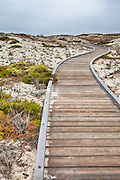 Wood Boardwalk to Asilomar State Beach