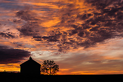 The Lower Fox Creek Schoolhouse and a lone cottonwood tree are silhouetted against a dramatic fall sunrise at the Tallgrass Prairie National Preserve. The 10,894-acre Tallgrass Prairie National Preserve is located in the Flint Hills of Kansas in Chase County near the towns of Strong City and Cottonwood Falls. Less than four percent of the original 140 million acres of tallgrass prairie remains in North America. Most of the remaining tallgrass prairie is in the Flint Hills in Kansas. Tallgrass Prairie National Preserve is the only unit of the National Park Service dedicated to the preservation of the tallgrass prairie ecosystem. The Tallgrass Prairie National Preserve is co-managed with The Nature Conservancy.