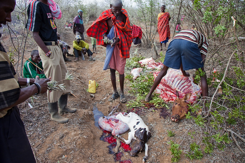 Villagers inspect the carcass of a cow they slaughtered after it swallowed more than 10 kilograms of plastic bags and became critically bloated in a village near Narouk, Kenya.  This discovery came at the cost of two cattle in a culture that values livestock highly. In the dry, near desert conditions of drought stricken Kenya, discarded plastic bags are eaten by cows while grazing. Here the dead calf is removed from the birth sack. Maasai wealth is derived from the cattle owned, the land, and the number of children born to support the family busines, which is cattle and goats.