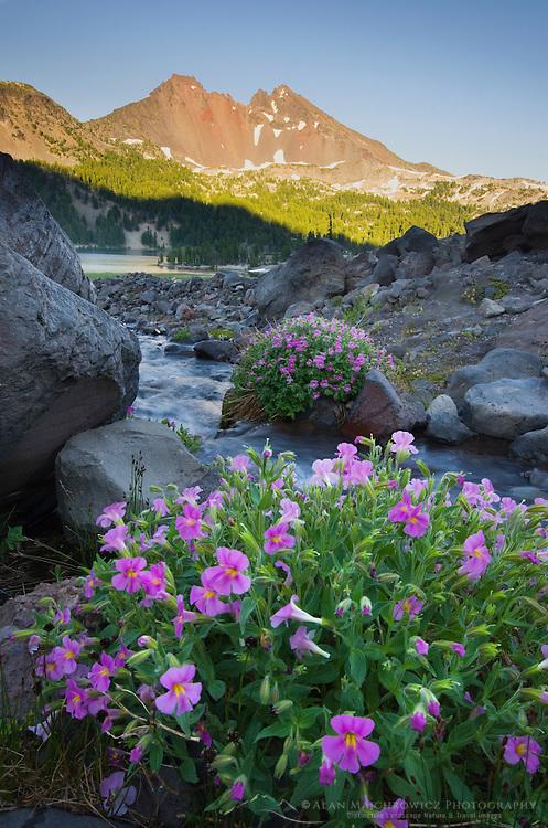 Broken Top Mountain and Purple Monkey Flowers (Mimulus lewisii), Three Sisters Wilderness, Oregon