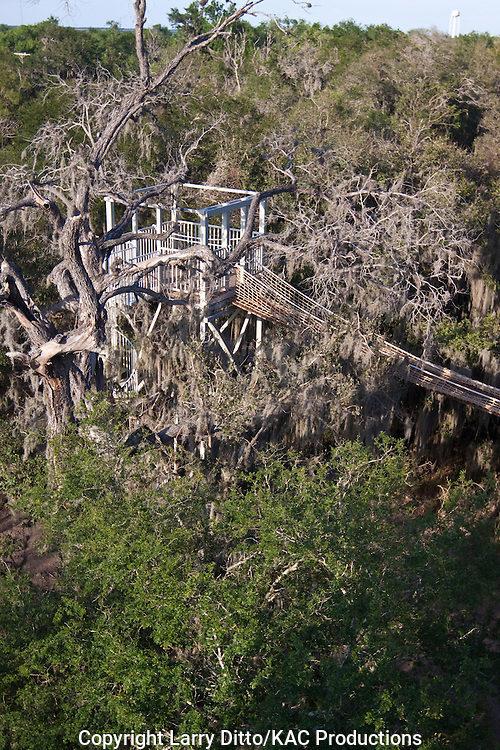 Riparian forest, Canopy Walk and Observation Tower at Santa Ana National Wildlife Refuge, Hidalgo Co., Texas, USA on the Rio Grande
