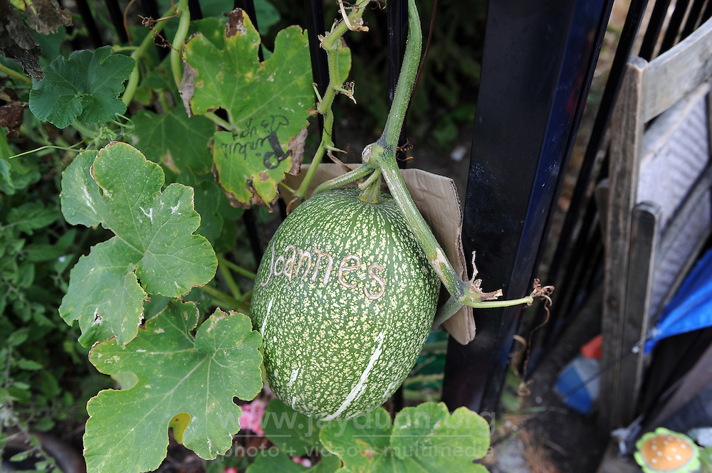 Soledad Street resident Joanne Castro has her eye on this melon growing in the Chinatown Community Garden, seen here during Thursday morning's sweep of Chinatown by the city of Salinas.