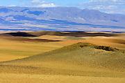 GOBI DESERT, MONGOLIA..08/25/2001.North of Bayanlig..(Photo by Heimo Aga).