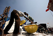 Workers at Mangalore fish market, India