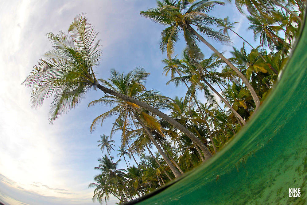 Palm trees and ocean. San Blas Islands