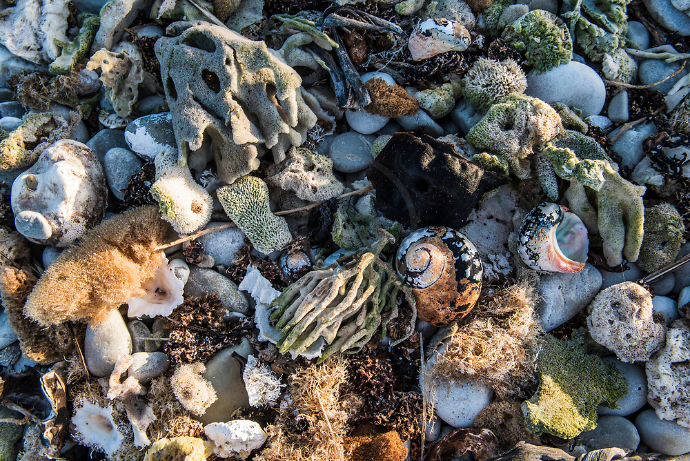 beach detritus, Agulhas National Park, Western Cape, South Africa